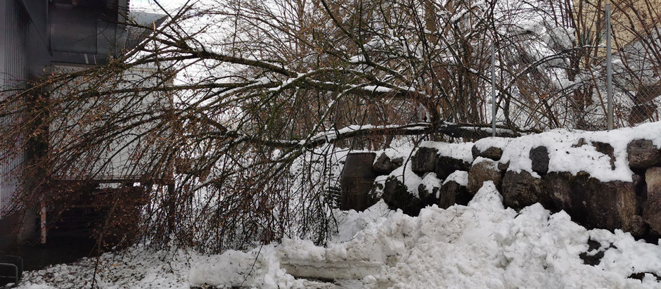 Holzer Gruppe: Umgestürtzter Baum