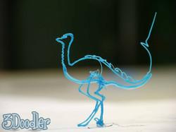 Ostrich-Solo.jpg