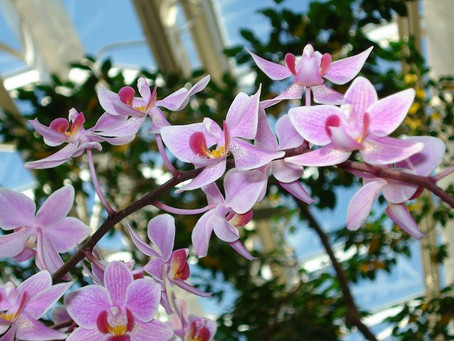 Orchid Show Time - Botanical Gardens