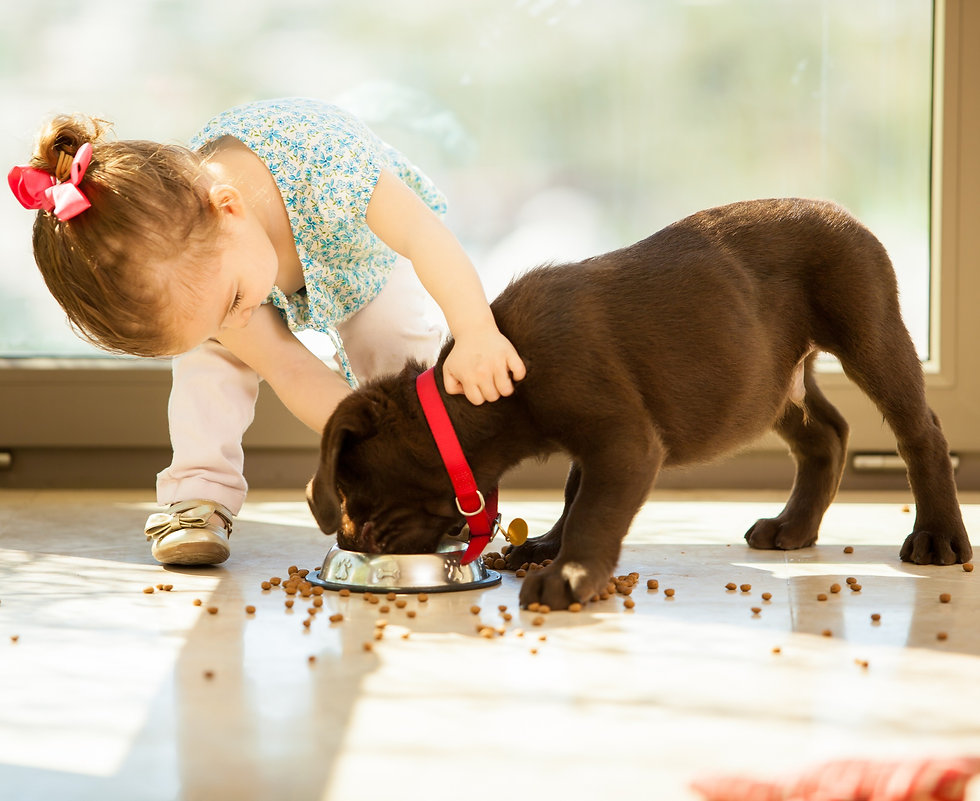 bigstock-Cute-little-girl-feeding-her-p-