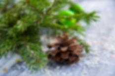 Pine cone scene .jpg