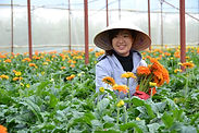 SaoKhue Premium - Vietnam Agriculture Projects