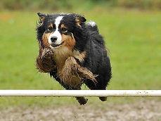 jumping high.jpg