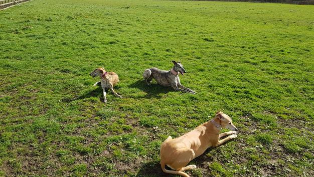 Enclosed Dog Walking Field