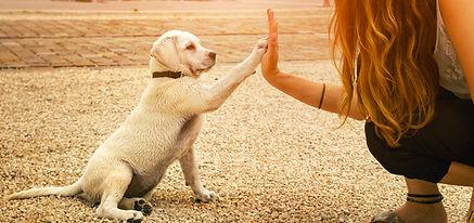 tamu_obedience_header_0.jpg