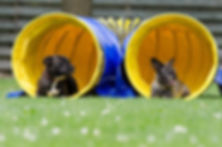 Dogs sunbathing in the dog agility tunnel, Resting Dogs at Fidosfun, Dog agility training, dog walking fields, secure fields, agility equipment hire