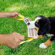 tugging dog.jpg