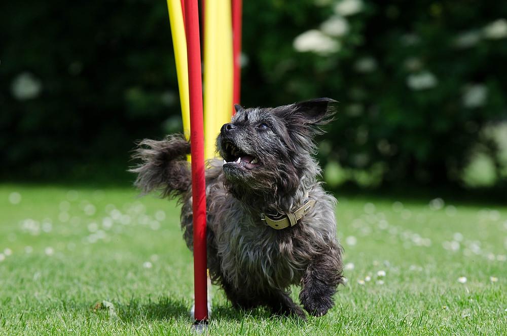 weave training, poles