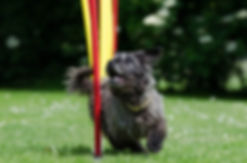 Dog agility weaves, agility poles, agility training on weaves, fidosfun dog agility training, agility equipment hire, secure walking fields wokingham, dog training, dog obedience