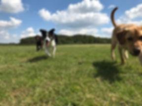 bin dogs.jpg