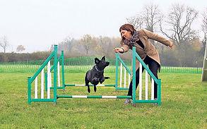 fidosfun, dog agility, dog training, dog walk, dog fields