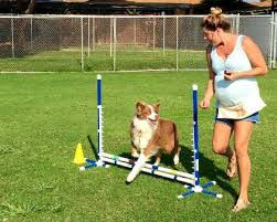 Agility training, Fidosfun dog agility, what is dog agility, dog training