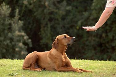 Dog-Obedience-Training.jpg
