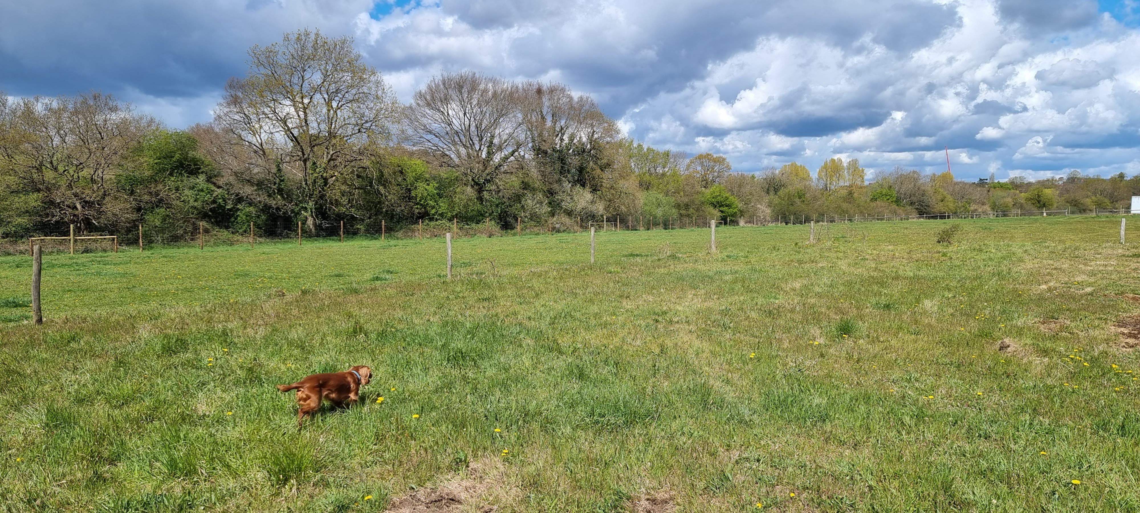 WOKINGHAM (Field 1) - 30 Minutes