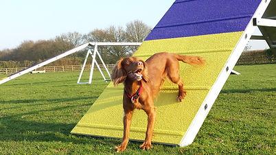 a-frame dog agility training, fidosfun agility trainer, fidosfun Wokingham, agility equipment, weaves, tunnels, dog walk equipment, agility contacts, dog control