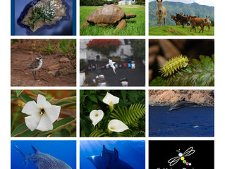 Get inspired by St Helena 2019