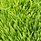 Thumbnail: Herbe de blé - Agropyre