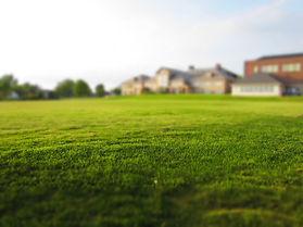 lawn-768316_1280.jpg