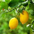 Prog_citricos.jpg