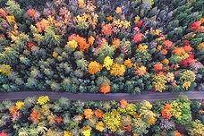 AutumnTreesC.jpg