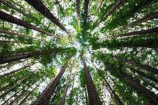 TreesFromGroundC.jpg