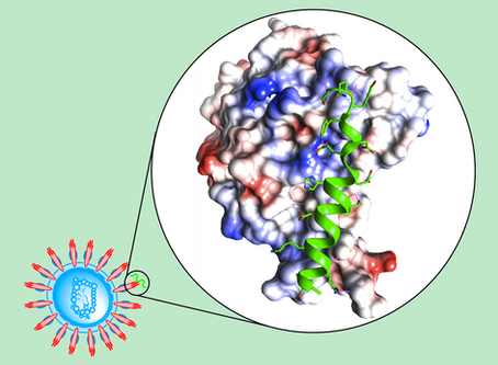 Fast Discovery of Peptide Binders Against Coronavirus