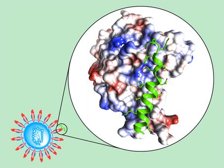 Fast Discovery of Peptide Binders Against Coronavirus