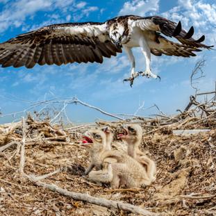 بحثا عن طائر العقاب « النساري» فوتوغرافيون بحرينيون يوثقون الحياة الفطرية في جزر «حَوَار»