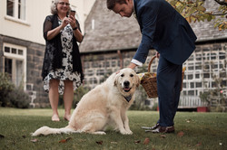 wedding photographers Auckland 87585