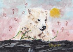 Polar Bear (day excursion)