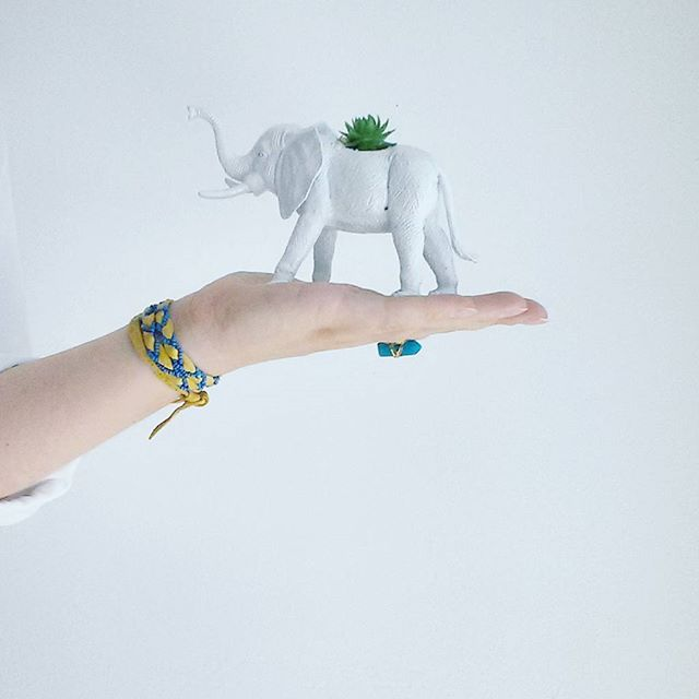 This little white elephant + succulent  make the perfect pair! Add a whimsical touch to your dorm ro