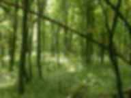 Skov,_pop_up_præster_redigerede.jpg