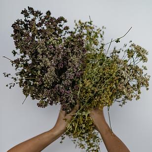 handpicked herbs plukttea.png