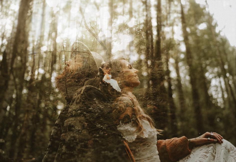 forestelopement.jpg