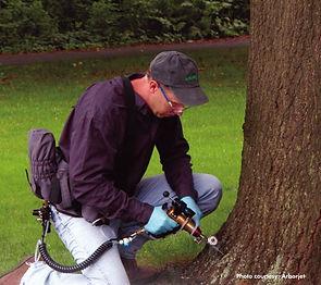 tree injection.jpg