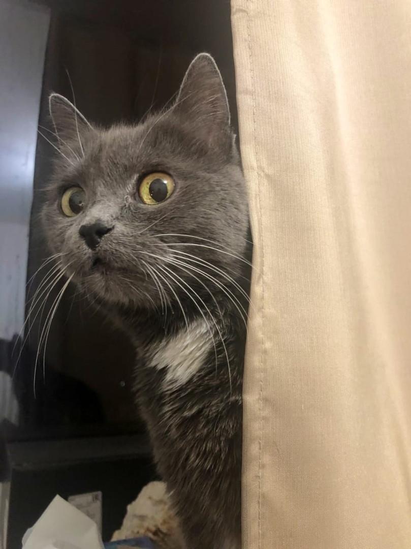 Домашние животные. Хитрая кошка Гамлет.