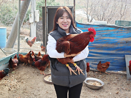 uLikekorea succeeds in developing the world's first poultry health care service