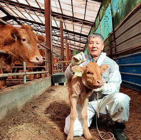uLikeKorea wins animal medical device certification in Korea, Japan for its calf biocapsule