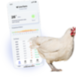 LiveChicken2.png