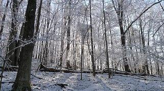 Winter 2020 Image for site.JPG