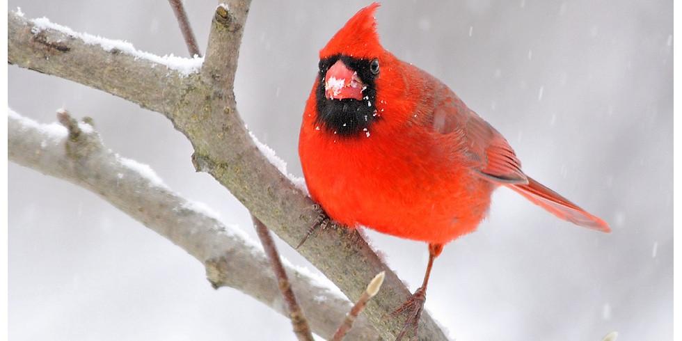 Winter Birds Hike
