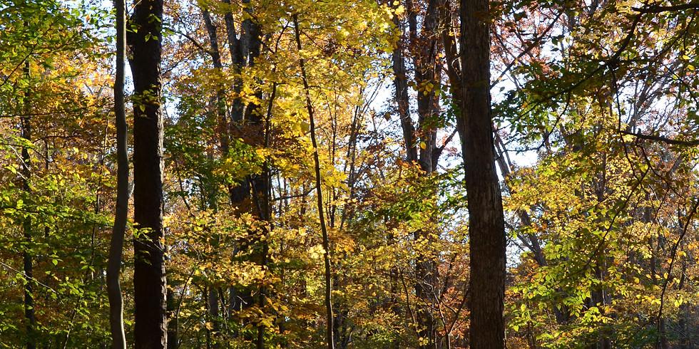 Fall Ecology