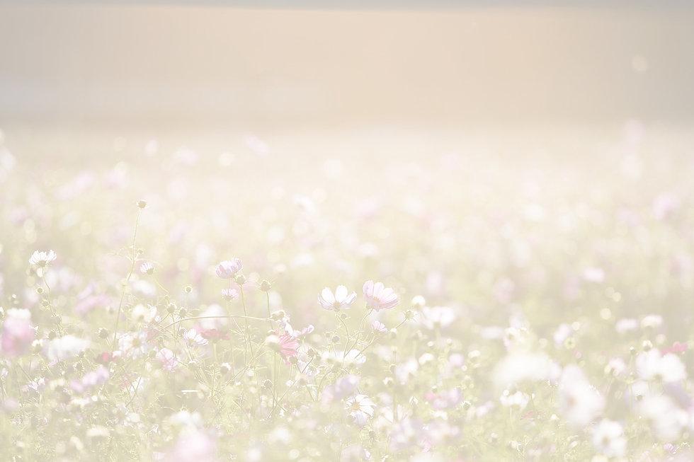 Field of Flowers_edited.jpg