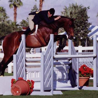 Vested,  extremely intelligent TB with an amazingly spectacular jump. He was one of the overachievers. Carleton never schooled him in the warm-up ring. He was a bit quirky, you had to be a horseman to deal with him.  © Cathrin Cammett