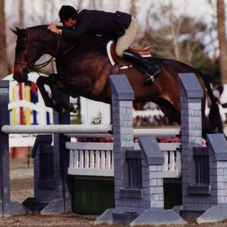 Corporate Profit, a true champion. Great mover, phenomenal jumper. Square, stylish – and ideal jump. Some found him difficult, not Carleton. You had to understand him. He was also a Thoroughbred and Carleton had a lot of success with Thoroughbreds. He was a consistent Champion, including the Garden (Madison Square Garden, former location of the National Horse Show) © Cathrin Cammett