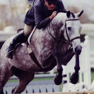 """Bucaletti A Thoroughbred that had a mentally rebellious personality. The day before the winter circuit started CB went out to the paddock and worked with him for 30 minutes on the ground. He was 3rd in his first two classes and then he started winning everything and never looked back. His warm-up was vertical-vertical combinations, maybe at 2'6"""" or 3'. Never a single jump."""
