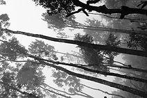 Forêt mystérieuse