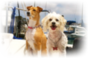 Dog Visits, Care and Sitting in Carlsbad San Diego North County