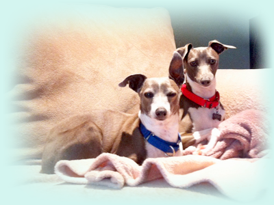 Pet sitting in Encinitas, San Diego North County