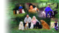 Experienced in Dog care and Dog walking